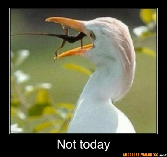 not-today